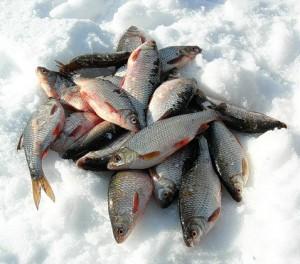 когда ловится рыба в черном море
